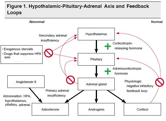 Figure 1. Hypothalamic-Pituitary-Adrenal Axis and Feedback Loops