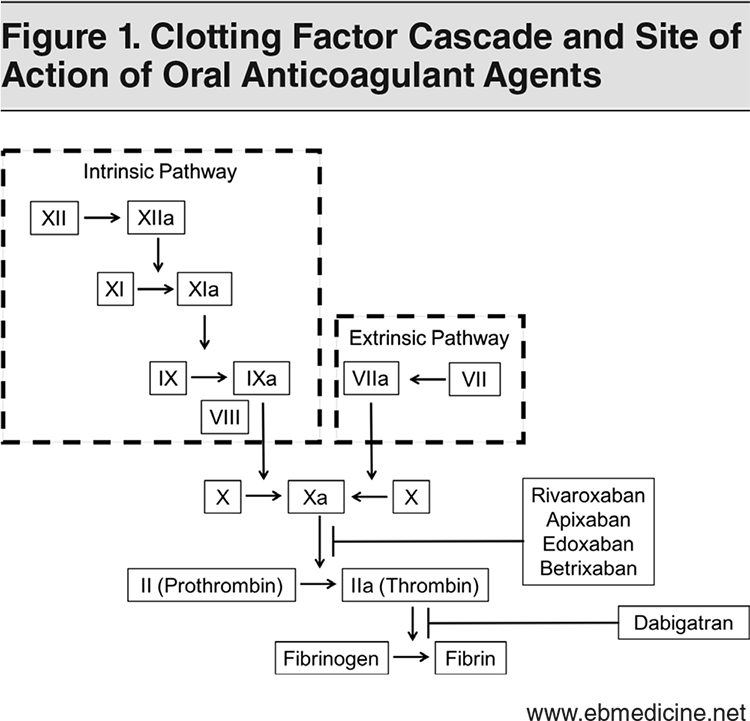 Figure 1. Clotting Factor Cascade and Site of Action of Oral Anticoagulant Agents