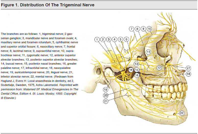 Figure 1. Distribution Of The Trigeminal Nerve