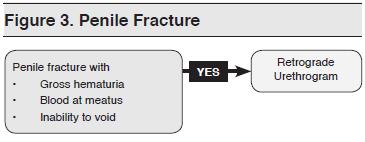 Figure 3. Penile Fracture