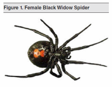 Figure 1. Female Black Widow Spider