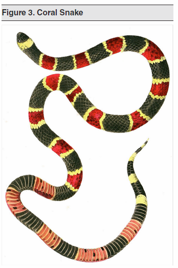 Figure 3. Coral Snake